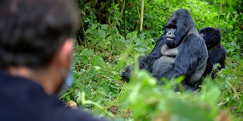 3-Day Rwanda Gorilla Experience