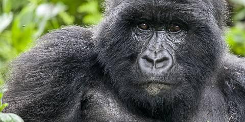 2-Day Rwanda Gorilla Trekking Tour