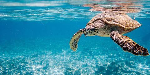10-Day South African Safari & Mauritius