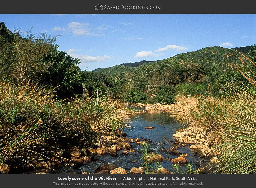 Lovely scene of the Wit River in Addo Elephant National Park, South Africa