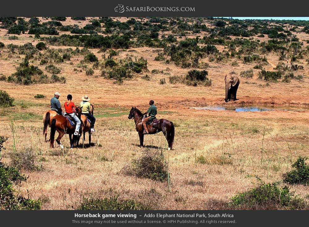 Horseback game viewing in Addo Elephant National Park, South Africa