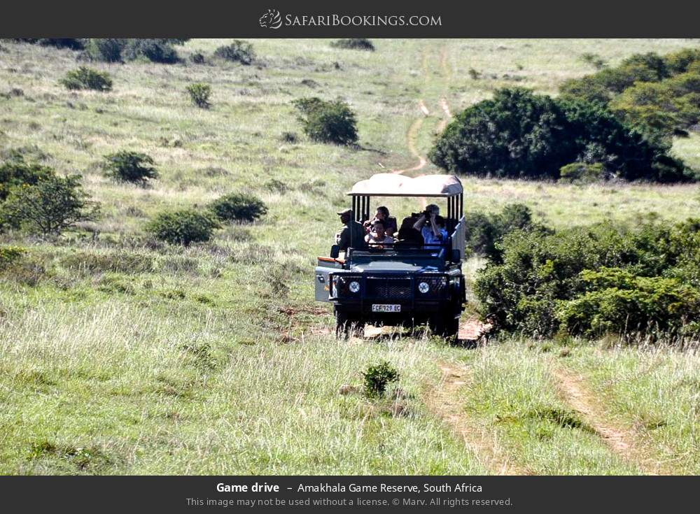 Game drive in Amakhala Game Reserve, South Africa