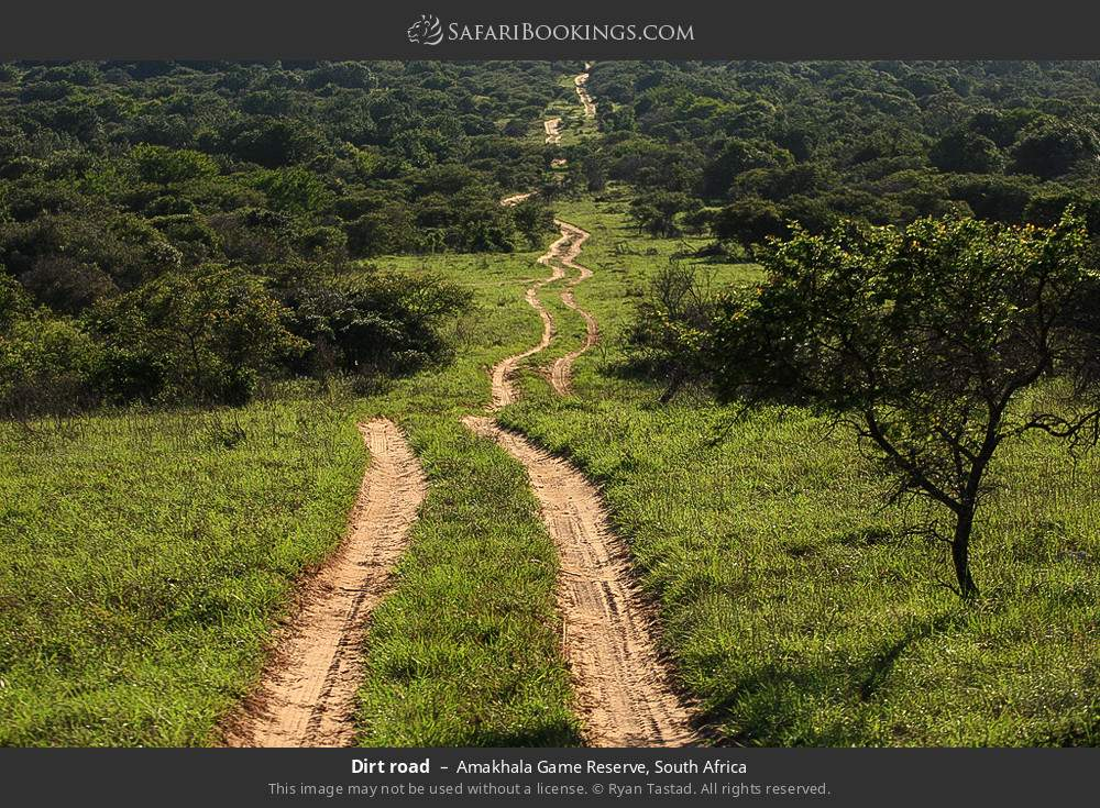 Dirt road in Amakhala Game Reserve, South Africa