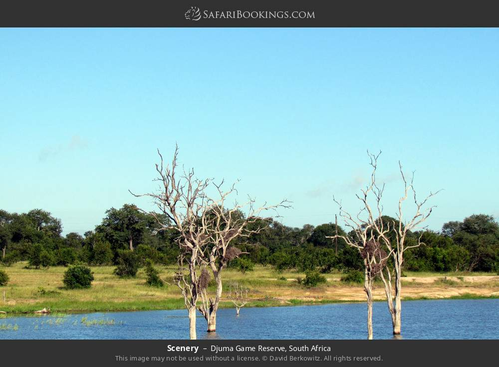 Scenery in Djuma Game Reserve, South Africa