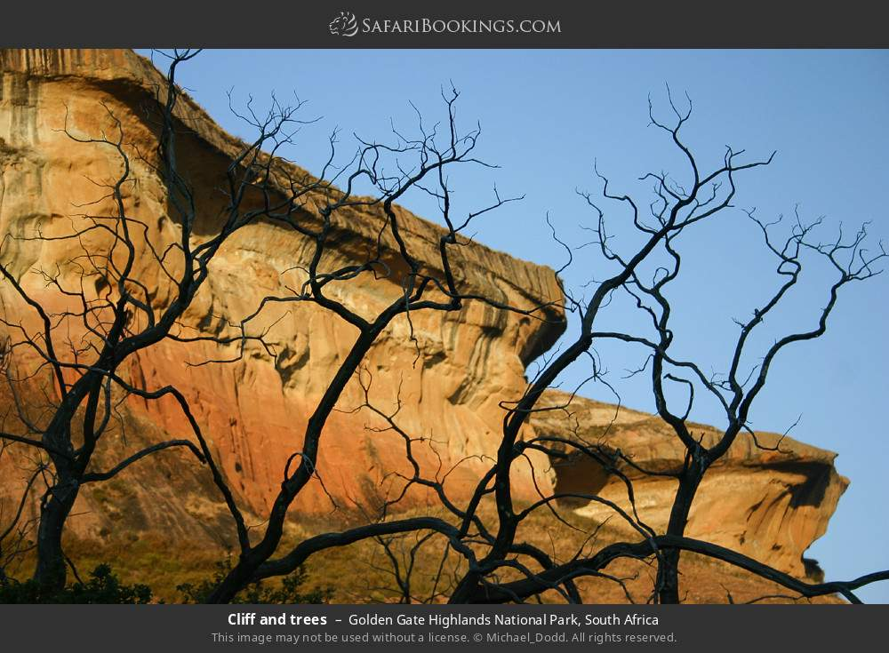 Cliff and trees in Golden Gate Highlands National Park, South Africa