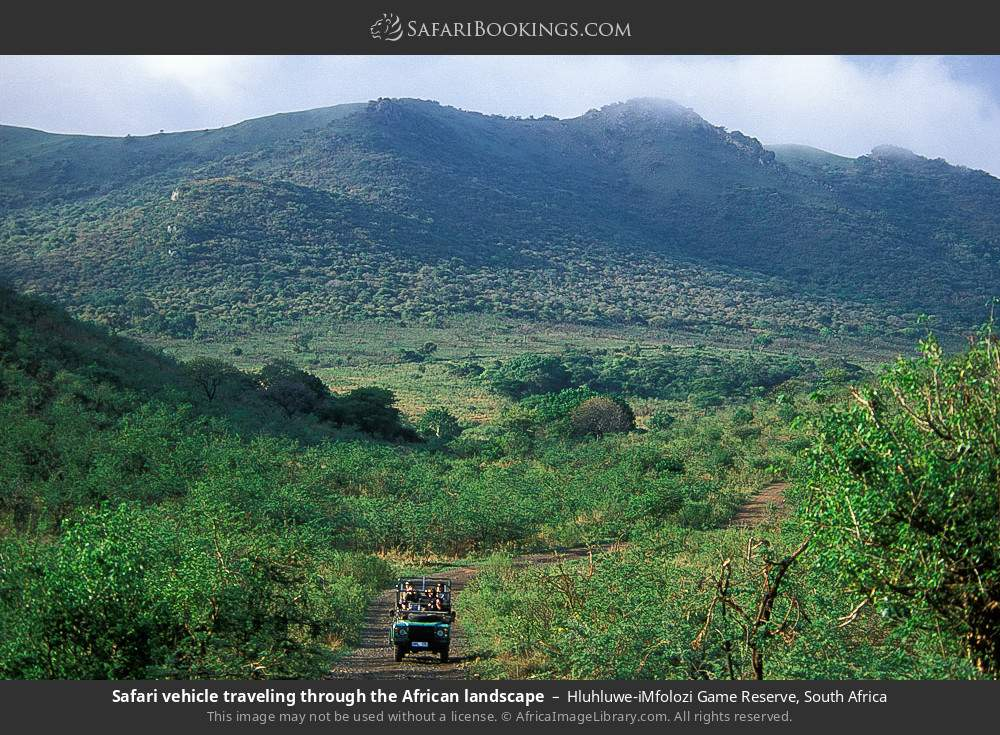 Safari vehicle travelling through the African landscape in Hluhluwe-Umfolozi Game Reserve, South Africa