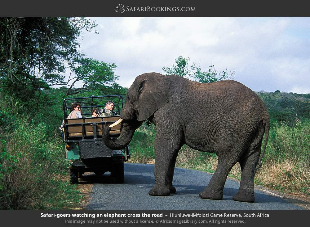 Safari-goers watching an elephant cross the road in Hluhluwe-Umfolozi Game Reserve, South Africa