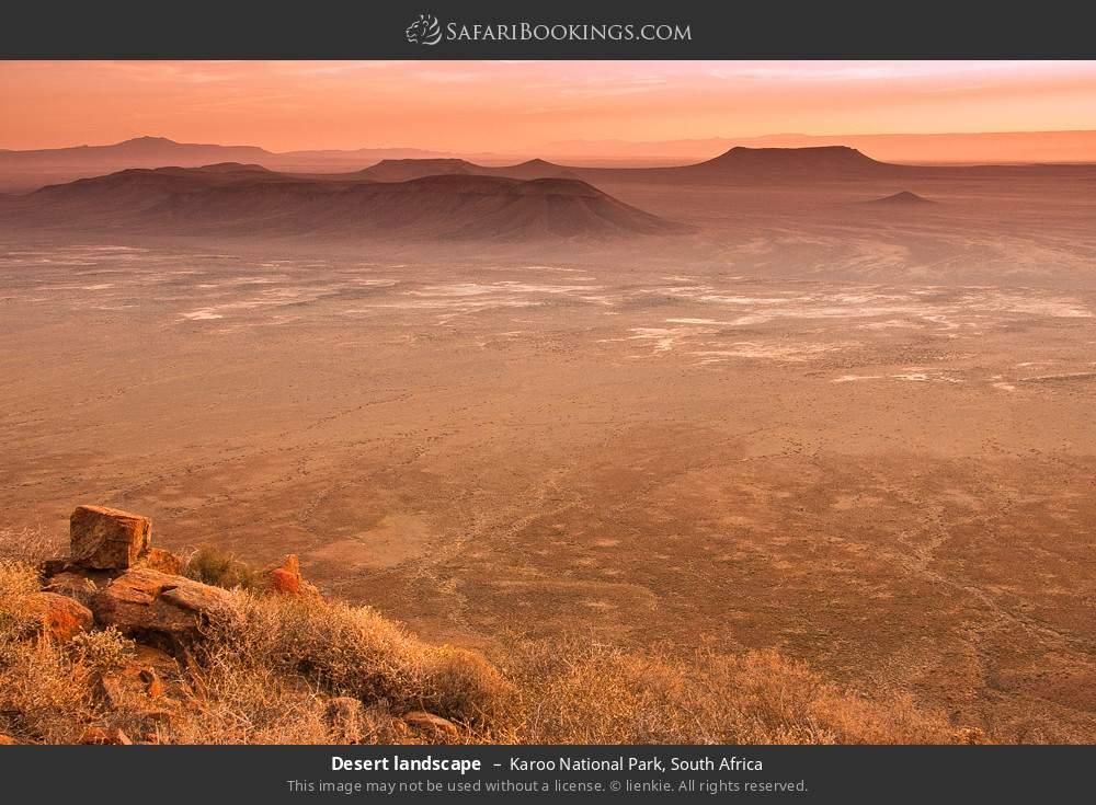 Desert landscape in Karoo National Park, South Africa
