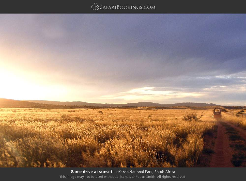 Game drive at sunset in Karoo National Park, South Africa