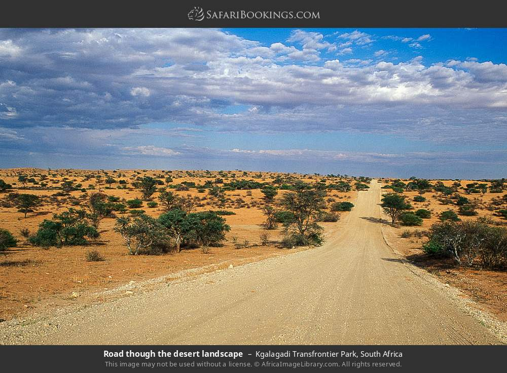 Road though the desert landscape in Kgalagadi Transfrontier Park, South Africa