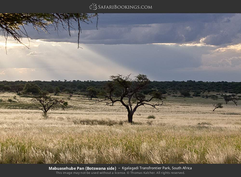 Mabuasehube Pan (Botswana side) in Kgalagadi Transfrontier Park, South Africa