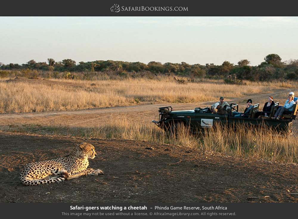 Safari-goers watching a cheetah in Phinda Game Reserve, South Africa