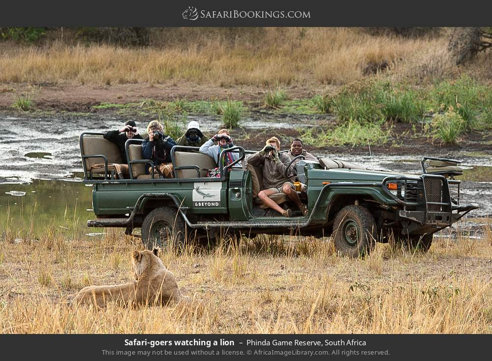Tourists watching a lion in Phinda Game Reserve, South Africa