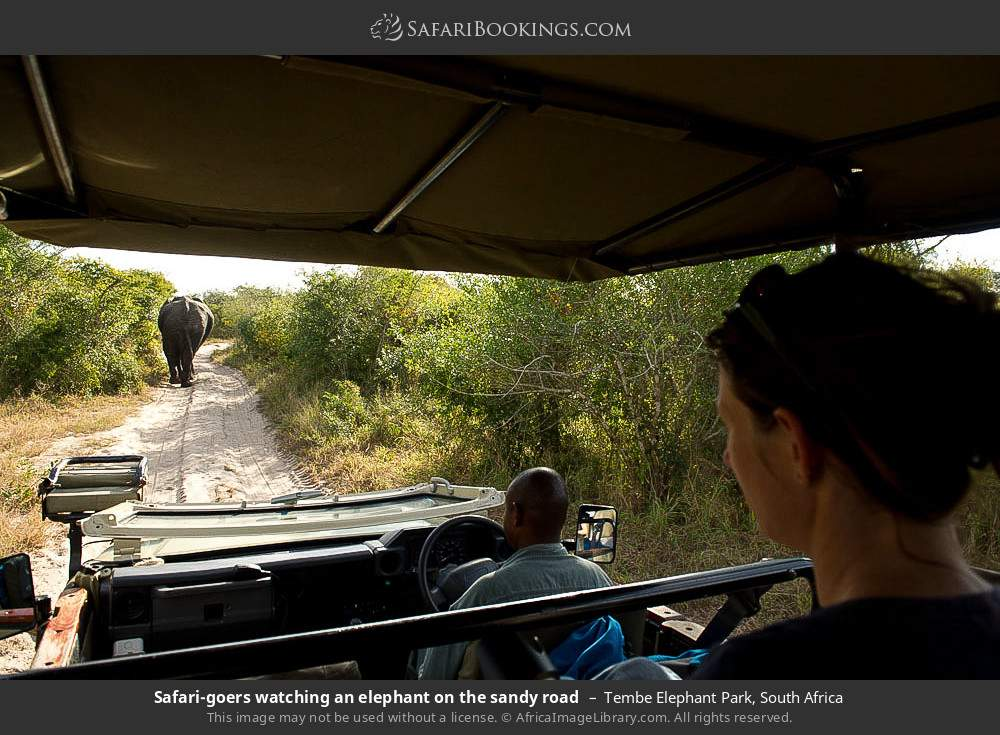 Tourists watching an elephant on the sandy road in Tembe Elephant Park, South Africa