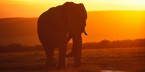 14-Day Malaria Free South Africa Safari