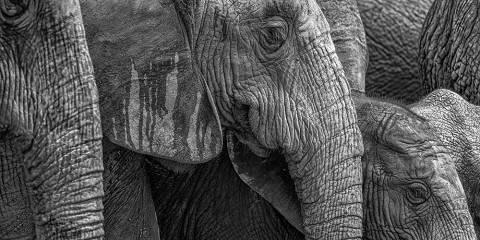 4-Day Kruger Panoramic Spectacular