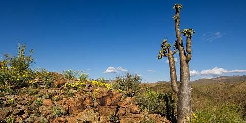 14-Day East Africa Wildlife Tour Ngorongoro Crater Safari