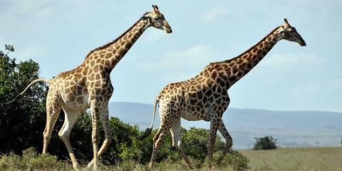 5-Day South Africa Safari Escape