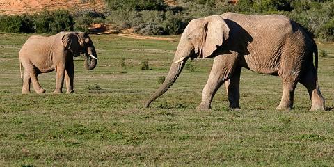 4-Day Classic Chalet Kruger Park Safari