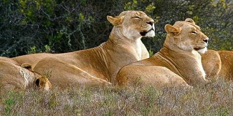 3-Day Affordable Kruger Wildlife Safari