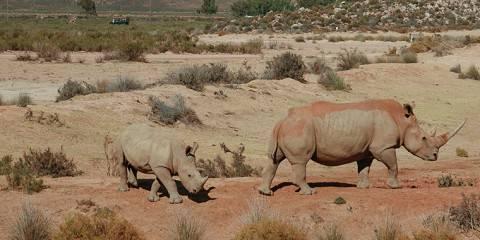 10-Day A Perfect Holiday for Wildlife Safari and Zanzibar