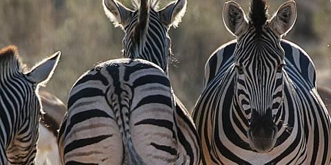 3-Day Pilanesberg National Park Getaway