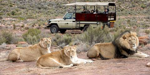 4-Day Luxury Tour Kruger Park and Greater Kruger