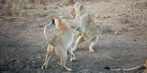 13-Day Budget Kenya Safari