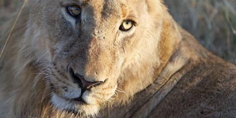 5-Day Sabi Sands & Timbavati Safari
