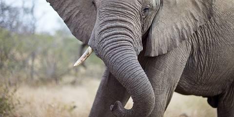 5-Day Uganda Wildlife and Gorilla Tour