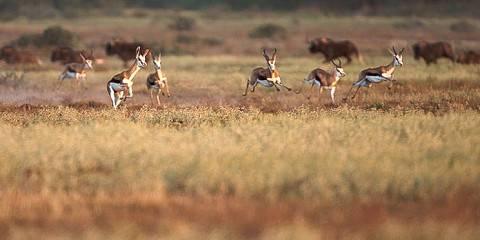 4-Day Masai Mara Lake Nakuru Camping