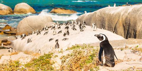 9-Day Cape Town, Franschhoek& Idube Game Lodge- 8 Nights