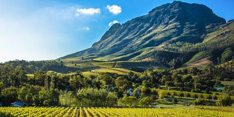 11-Day Cape Town, Winelands and Safari