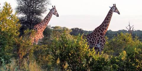 5-Day South African Spa & Safari Experience