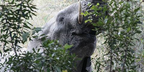 12-Day Mara/ Nakuru/ Amboseli/ Tsavo West & East/ Mombasa