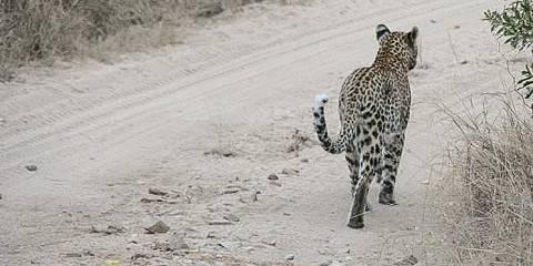 5-Day Luxury Kruger National Park Safari