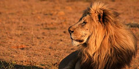 8-Day Magical Northern Cape; Kgalagadi and Augrabies