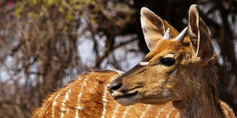 15-Day Selous, Udzungwa, Kilombero Valley, Katavi & Gombe