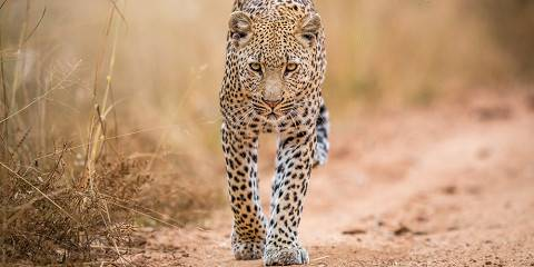 4-Day Private Photographic Safari - Kruger National Park