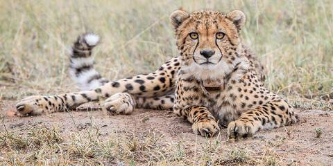4-Day Kruger, Sabi Sand & Panorama Journey