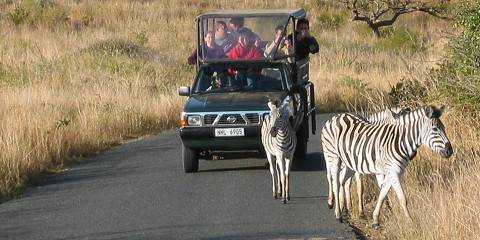 Safari (Greater Kruger) Family Friendly