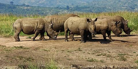 8-Day Private Kruger Safari
