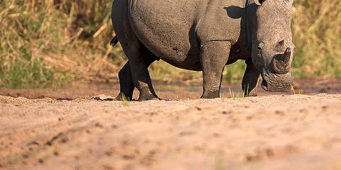 4-Day Tarangire, Ngorongoro, Serengeti