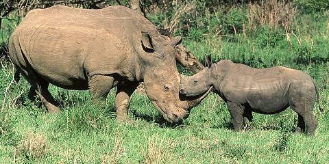 5-Day Serengeti River Crossing Migration Safari