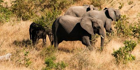 4-Day Simply the Best Kruger & Sabi Sand Safari
