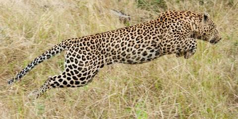 5-Day Wild Africa: Big Five Safari