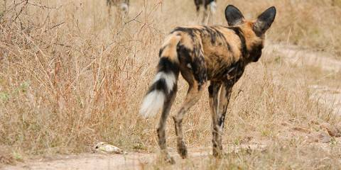 4-Day Shared Tent / Backpacker Kruger Safari