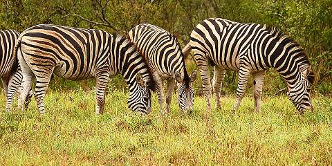 11-Day Explore Uganda Safari