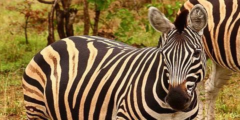3-Day Entabeni Safari Package