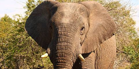 4-Day Kruger Park Centre and South Budget Safari